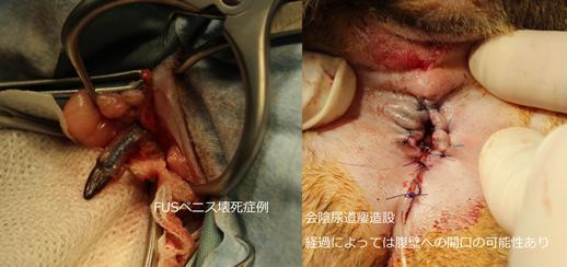 尿路救急外科症例